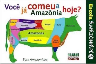 boi-amazonicus