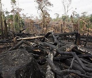 desmatamento_greenpeace