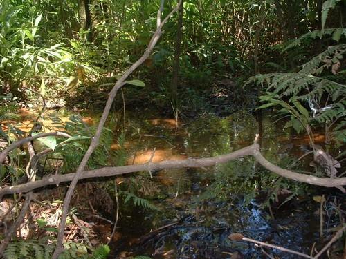 Água logo após nascente. É incrivel a quantidade de nascentes nessa região.
