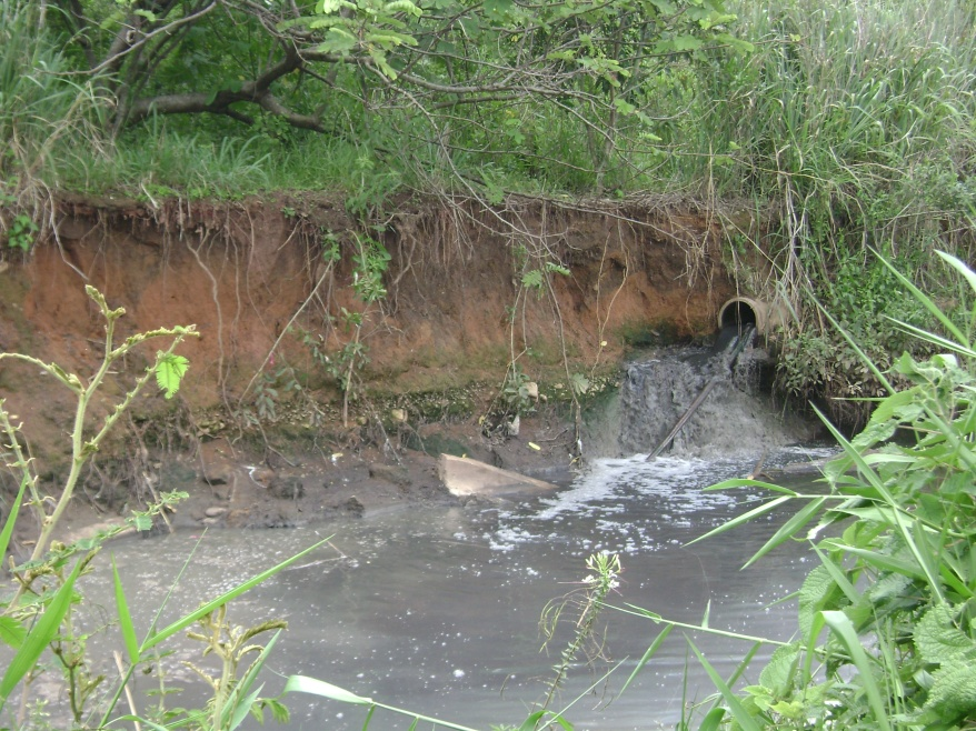 Falta de Saneamento Básico no Córrego Palmito
