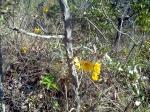 Flor do Cerrado na Serra das Areias