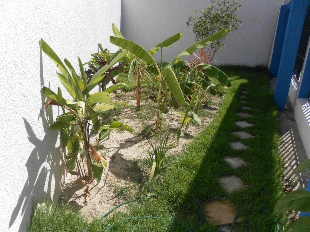 Fossas verdes são alternativas viáveis e ambientalmente corretas para tratamento deesgoto