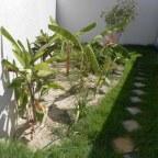 Fosas verdes son alternativas viables y ambientalmente correctas para el tratamiento de aguas residuales