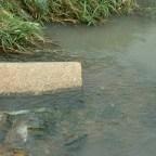Os males da poluição aquática