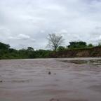 Mundo Paralelo: A Mata Ciliar e o Rio