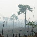 Como o Brasil sagrou-se campeão em corrupção e devastação ambiental?
