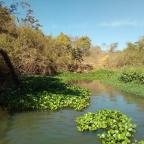 Se nada for feito já, o rio Meia Ponte vai secar