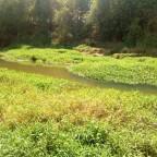 Vazão do rio Meia Ponte cai para nível próximo do racionamento