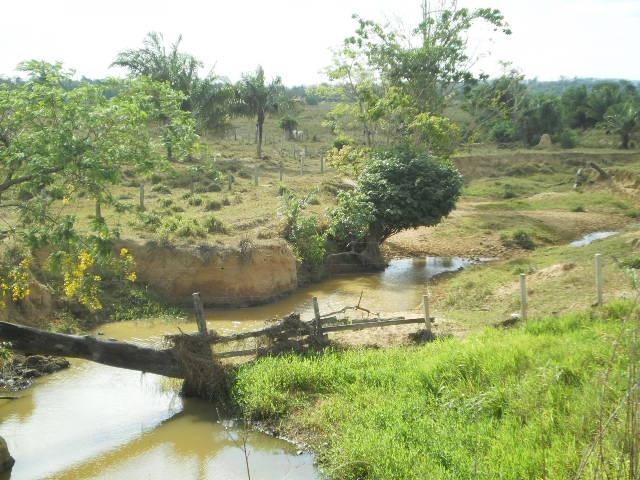 A destruição do Cerrado e os diasatuais
