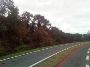 Mata próxima a etapa do parque Macambira Anicuns