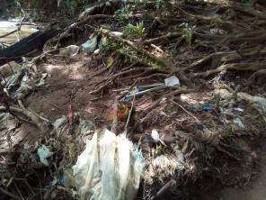 Plástico nas raízes expostas