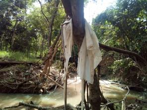 Plástico na árvore
