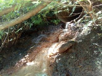 Lançamento clandestino de esgoto clandestino no córrego Água Branca após nascente