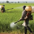 Chega de Agrotóxicos – Assine já pela aprovação da Política Nacional de Redução de Agrotóxicos