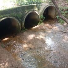 Manilhas logo após o campo de murundus. Repare a quantidade de água que escoam do campo. Nascente poderosa!