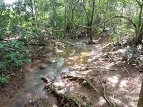 Manancial formado pelas águas de origem do campo de Murundus