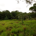 11 de Setembro – Hoje é dia do Cerrado!