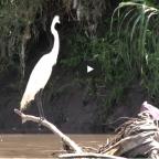 Girassol de Plástico – Documentário completo sobre o Rio Meia Ponte